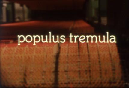 populus_still1